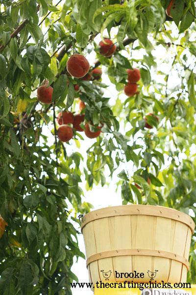 Fresh Peaches 'n Cream Pie