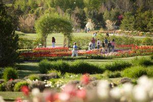 gardenstulips