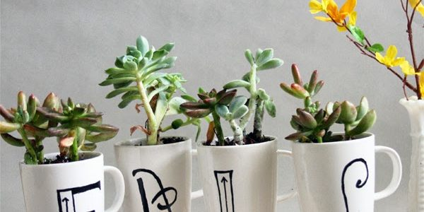 DIY Monogram Mug Succulent Garden:: Guest Post from Entirely Eventful Day