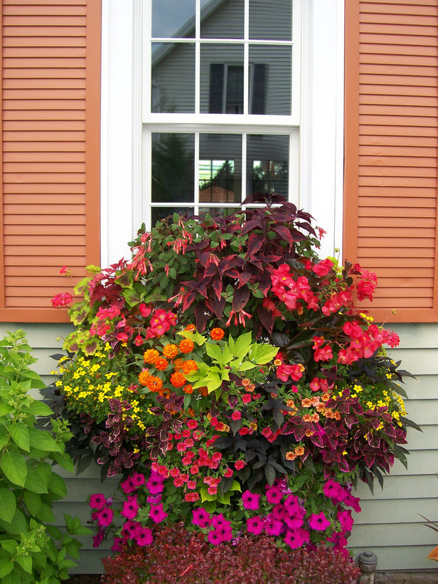 RMS-kmphelps_window-box-coleus-Supertunias-geraniums-Superbells-fuschia_s3x4_lg