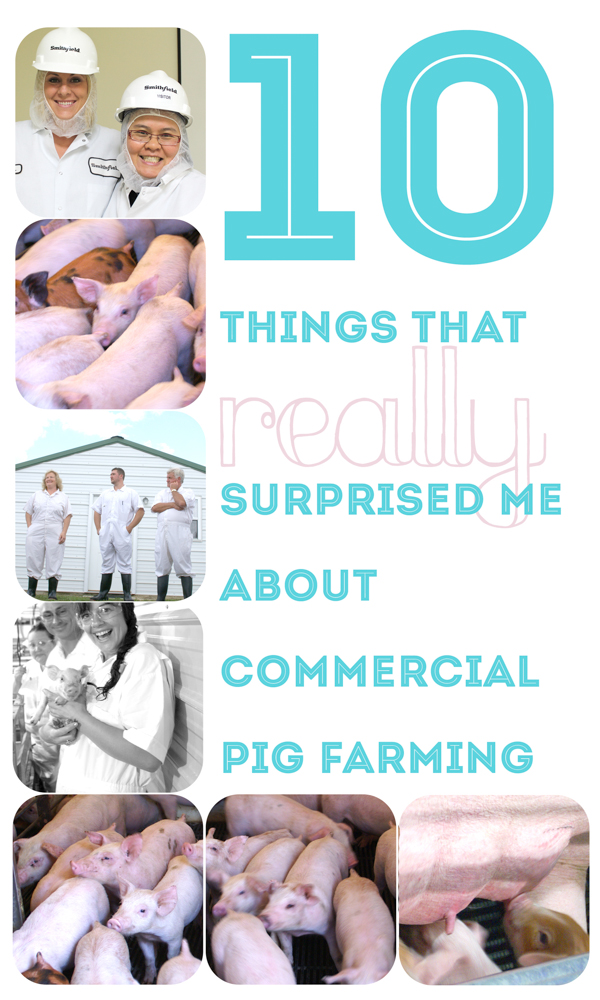 10 Things that REALLY Surprised Me About A Commercial Pig Farm I Visited