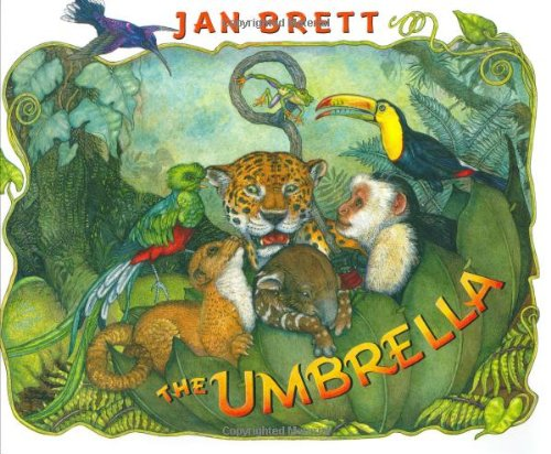 rainforest the umbrella