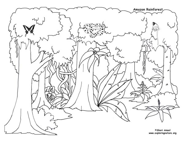 Rainforest Activities and Printables - My kids are going to love these crafts!
