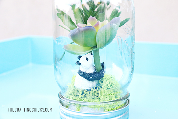 Learn about rainforest and create your own rainforest in a jar