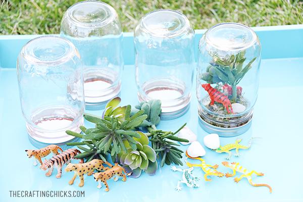 Create a Rainforest in a Jar