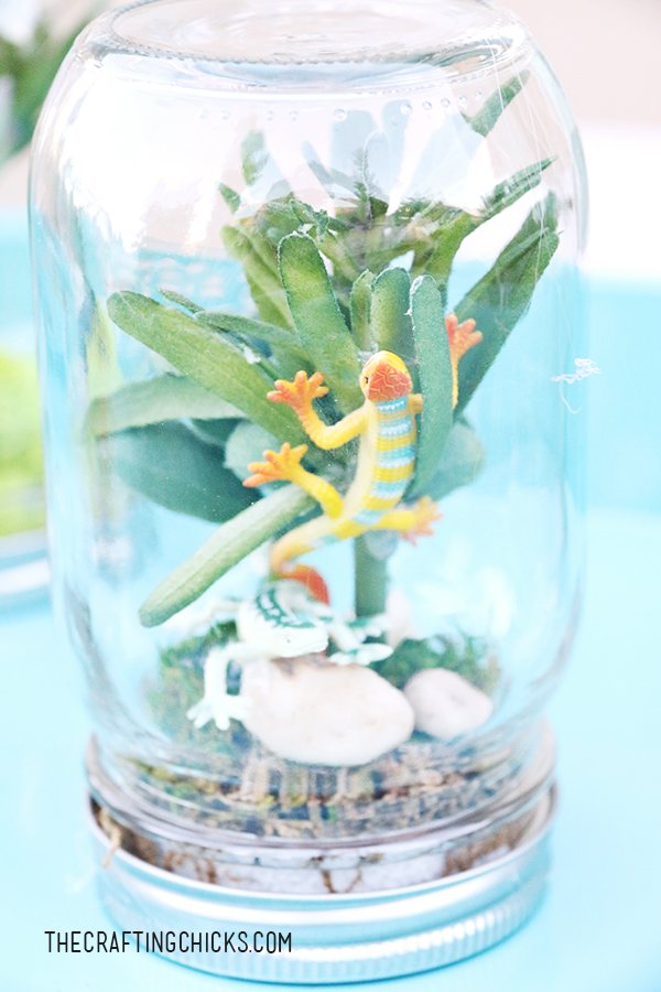 sm rainforest in a jar 3