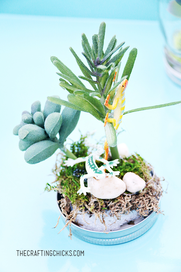 sm rainforest in a jar 6