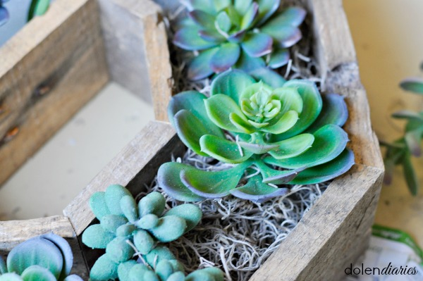 moss around faux succulents
