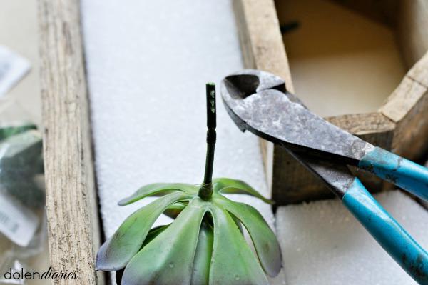 trim ends of succulent picks
