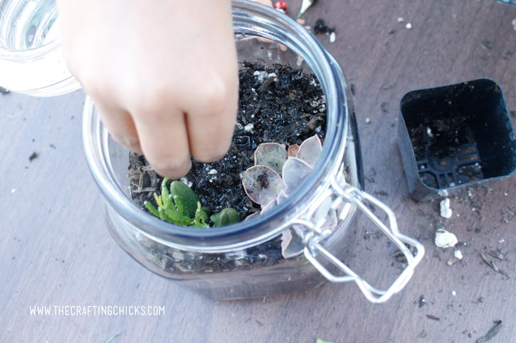 adding-plants-to-the-terrarium