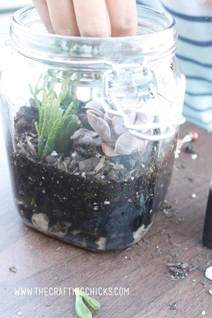 succulants-for-terrarium