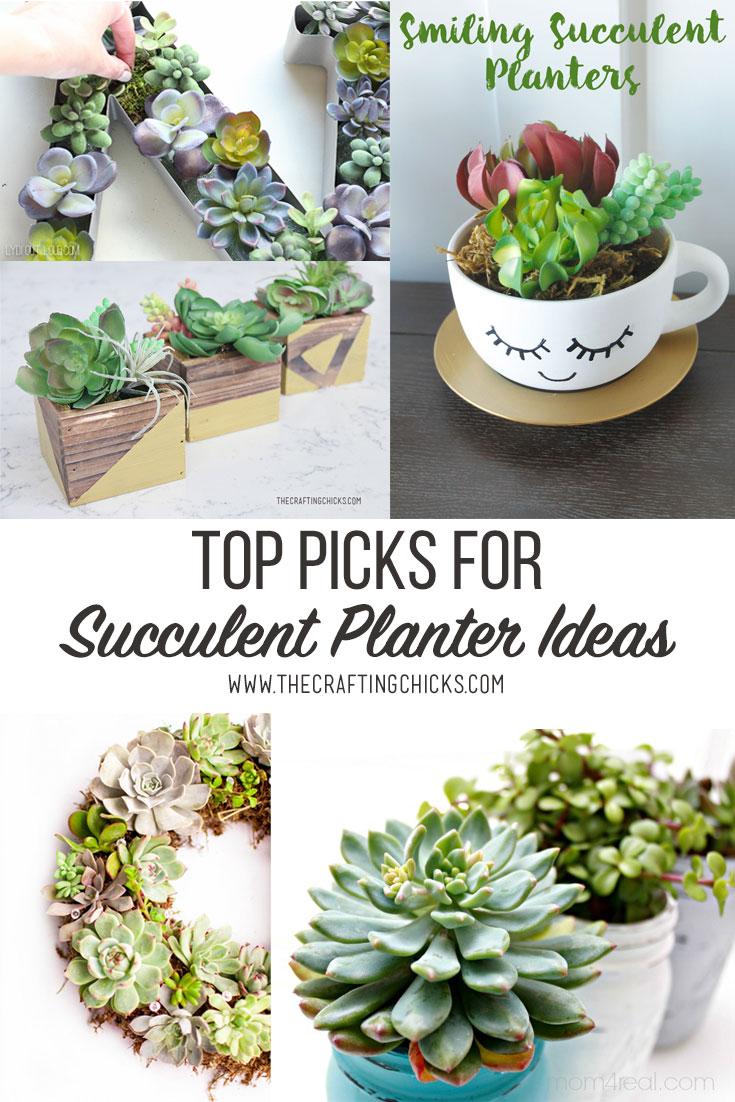 Top Picks for Succulent Planter Ideas