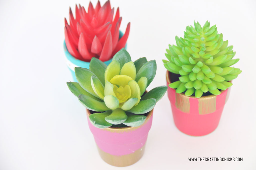 DIY Mini Painted Succulent Pots