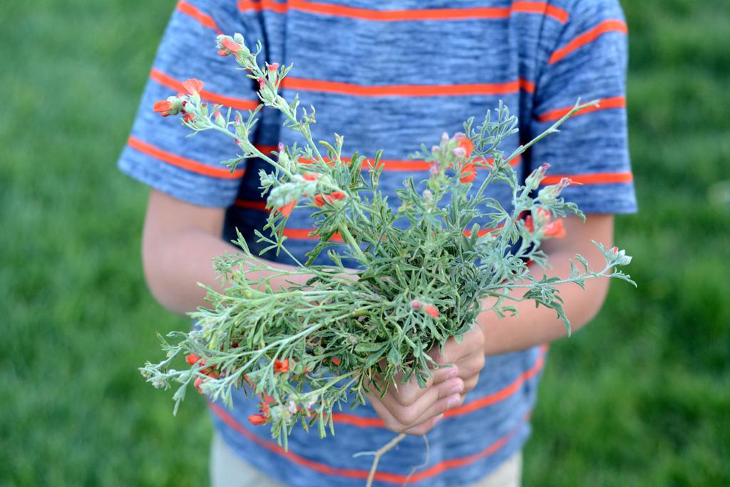 flower-weeds