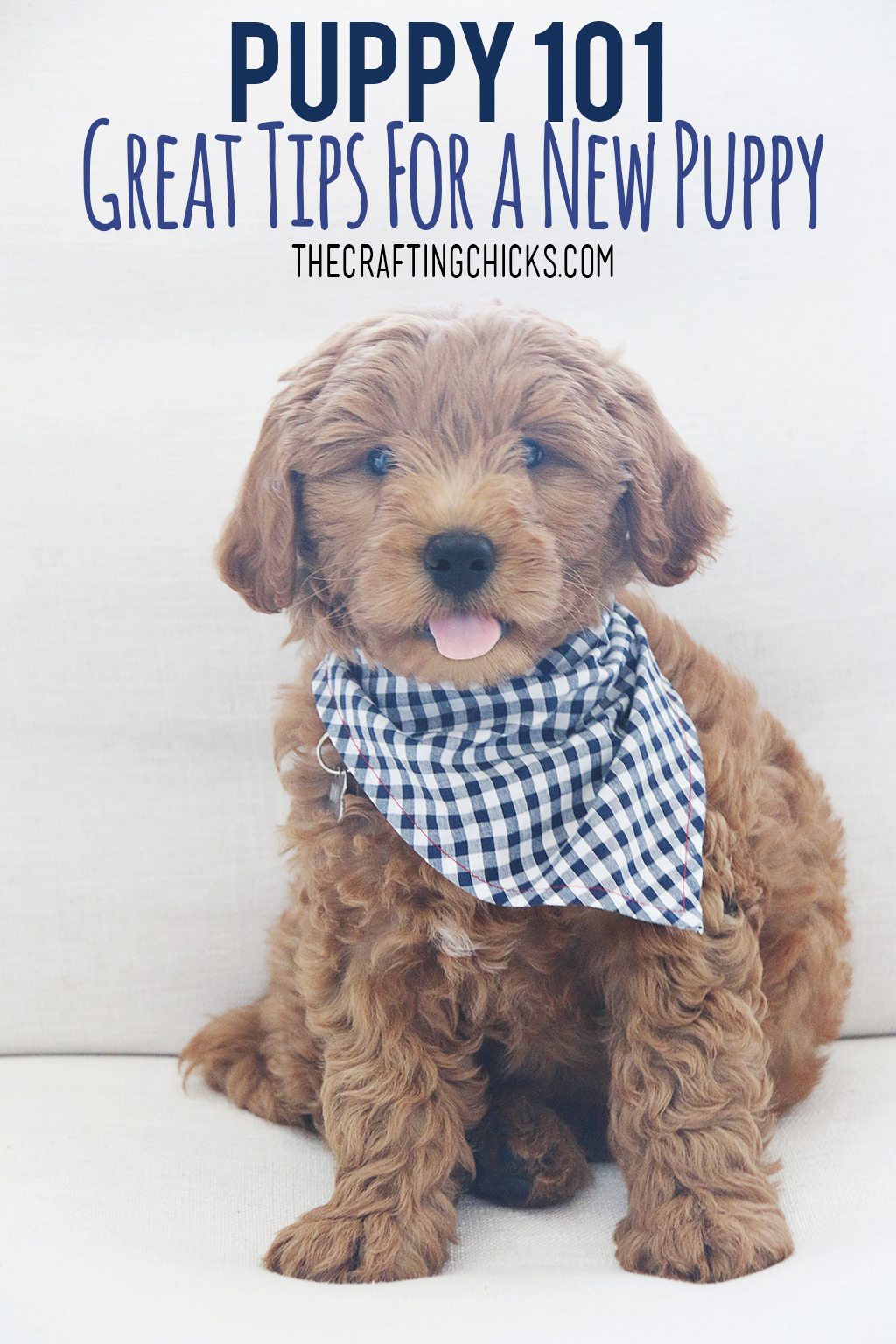 Puppy 101 | Great Tips for a New Puppy