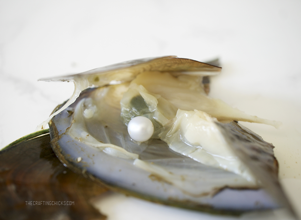 Oyster with pearl inside