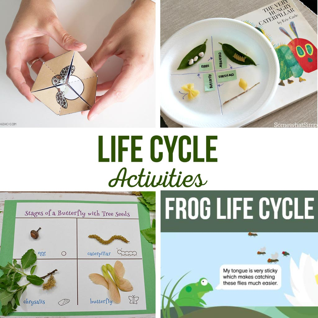 Life Cycle Activities | Simple kids activities that teach about the life cycle. Butterfly life cycle, frog life cycle, and rock life cycle #lifecycle #kidsactivity #activities #butterfly #frog #rock #turtle