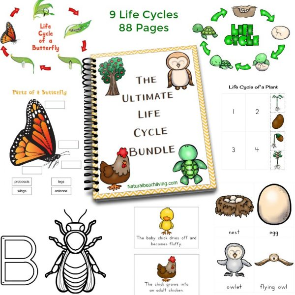Life Cycle Activities | Simple kids activities that teach about the life cycle. Butterfly life cycle, frog life cycle, and rock life cycle #lifecycle #kidsactivity #activities #butterfly #frog #rock