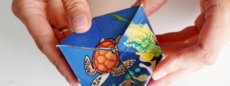 Printable Sea Turtle Life Cycle Flextangle