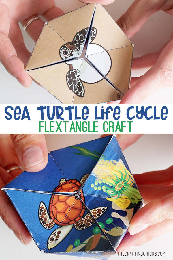 Sea Turtle Life Cycle Flextangle Craft Printable | A fun and educational printable kids craft. #lifecycle #science #printable #kidcraft