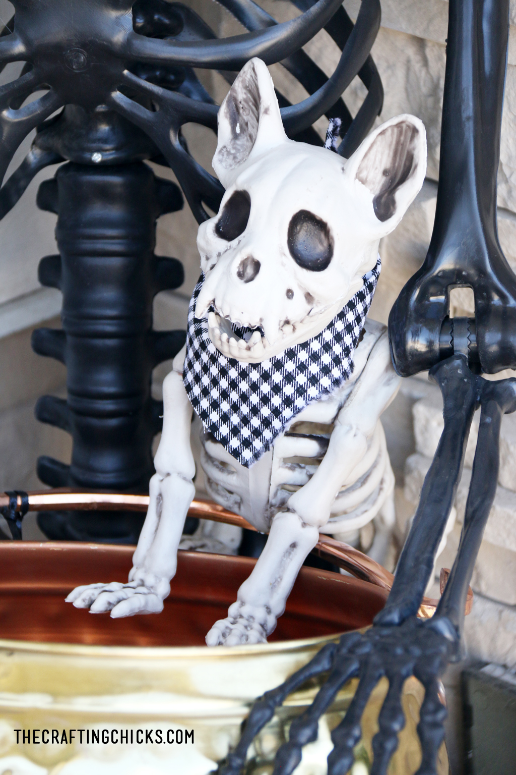 Skeleton dog on Cute and spooky halloween porch